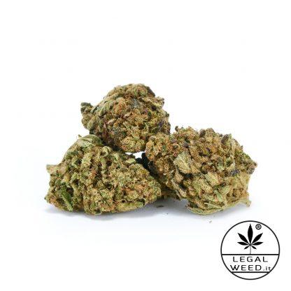 BLACK ERIKA infiorescenza di cannabis legal weed 416x416 - Black Erika - 2,5gr - Legal weed cannabis-legale, cannabis-light