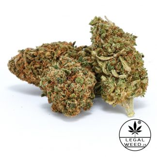 GOA SHANTI legal weed cannabis light italia 324x324 - Goa Shanti - 5gr - Legal weed infiorescenze, cannabis-light