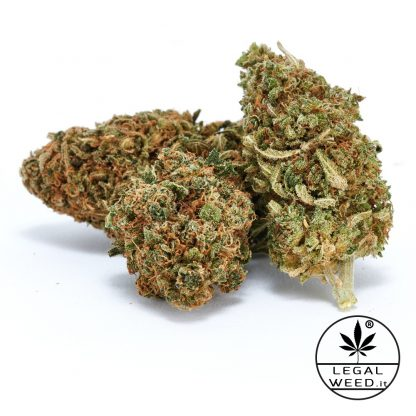 GOA SHANTI legal weed cannabis light italia 416x416 - Goa Shanti - 2,5gr - Legal weed infiorescenze, cannabis-light
