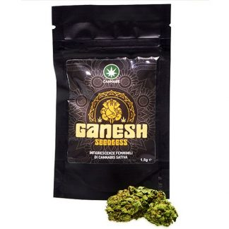 ganesh con busta 324x324 - Ganesh - 3gr - by Cannabe infiorescenze, cannabis-light