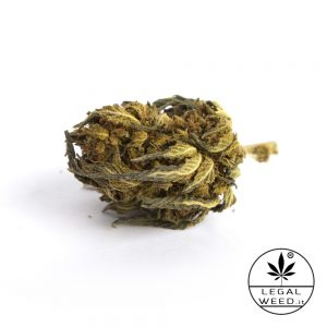 wild altea legal weed cannabis legale 300x300 - Wild Altea - 2,5gr - Legal weed cannabis-legale, fino-a-3-gr, cannabis-light