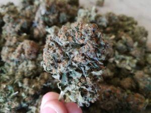 blue jo legal weed cannabislightitalia cannabis light 2 300x225 - blue-jo-legal weed cannabislightitalia cannabis light 2