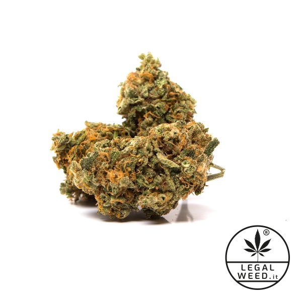 new hope legal weed fiori cannabis legale 600x600 - New Hope - 2,5gr - Legal weed cannabis-legale, fino-a-3-gr, cannabis-light