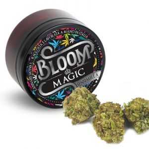 magic bloom cannabis legale light 300x300 - MAGIC - 3g - Bloom cannabis-legale, fino-a-3-gr, cannabis-light