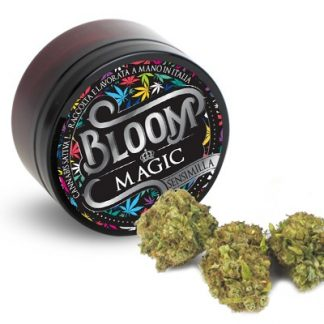 magic bloom cannabis legale light 324x324 - Magic - 3gr - Bloom cannabis-legale, cannabis-light