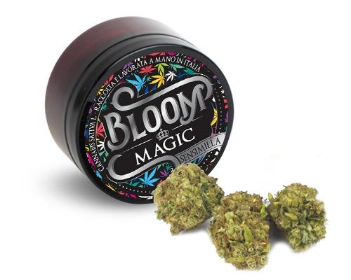 magic bloom cannabis legale light - Magic - 3gr - Bloom cannabis-legale, fino-a-3-gr, cannabis-light