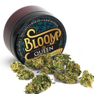 bloom queen cannabis legale cannabislightitalia 324x324 - Queen - 3gr - by Bloom infiorescenze, cannabis-light
