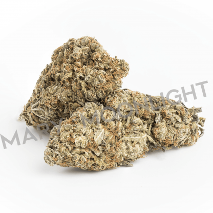 critical mary moonlight cannabis light italia 416x416 - Critical - 1 gr - by Mary Moonlight infiorescenze, cannabis-light