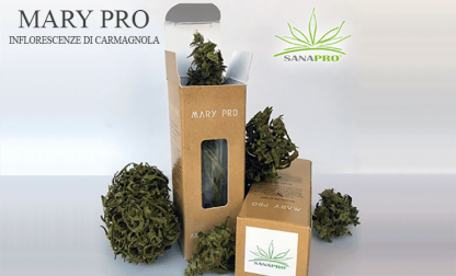 marypro sanapro cannabis light italia 416x252 - Mary Pro - 5gr - by Sanapro infiorescenze, cannabis-light, aromaterapia