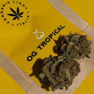 og tropical 324x324 - OG Tropical - 2gr - Cannabis light Italia infiorescenze, cannabis-light
