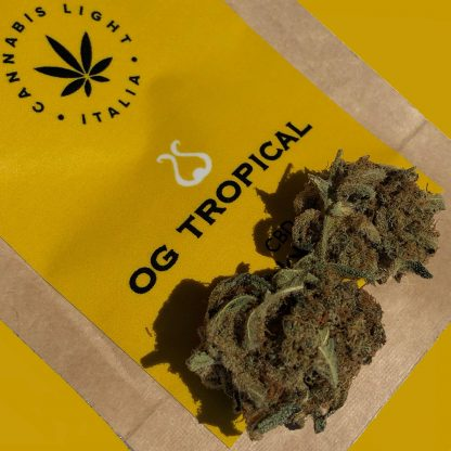 og tropical 416x416 - OG Tropical - 2gr - Cannabis light Italia offerte, infiorescenze, cannabis-light