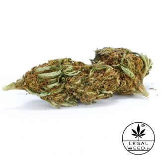 Camilla White legal weed cannabis light italia 324x324 - Camilla White - 5gr - Legal weed infiorescenze, cannabis-light