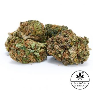 QUEEN GIADA legalweed cannabislightitalia 324x324 - Queen Giada - 2,5gr - Legal weed infiorescenze, cannabis-light
