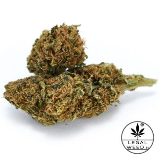 VIRGINIA WEST legal weed cannabis light italia 324x324 - Virginia west - 10gr - by Legal weed infiorescenze, cannabis-light