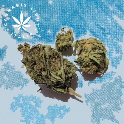 himalaya gold cannabis light italia fiori canapa legale shop 416x416 - Himalaya Gold - 2gr - by Cannabis light Italia offerte, infiorescenze, cannabis-light