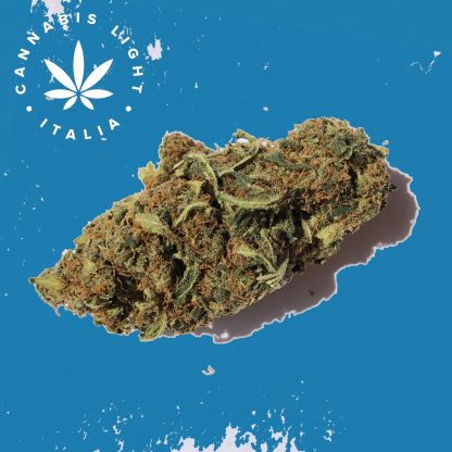 jack widow II cannabis light italia canapa legale shop 1 416x416 - Jack Widow II - 3gr - Cannabis light Italia infiorescenze, cannabis-light