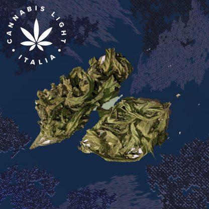 kompolti1 cannabis light italia fiori canapa legale shop 416x416 - Kompolti #1 - 8gr - Cannabis light Italia tisane, offerte, infiorescenze, cannabis-light
