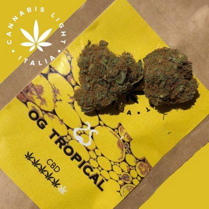 og tropical cannabis light italia canapa legale 416x416 - OG Tropical - 3gr - Cannabis light Italia infiorescenze, cannabis-light
