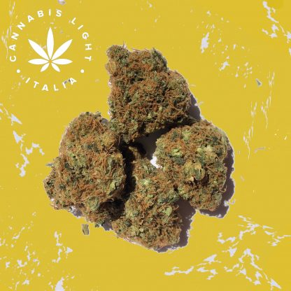 og tropical cannabis light italia canapa legale shop 416x416 - OG Tropical - 2gr - Cannabis light Italia offerte, infiorescenze, cannabis-light