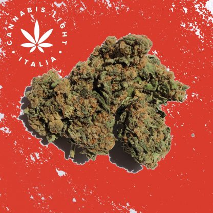 sweet devil cannabis light italia canapa legale shop 416x416 - Sweet Devil - 3gr - Cannabis light Italia infiorescenze, cannabis-light