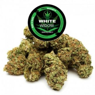 white widow cbd 25 xxxjoint cannabis light italia 324x324 - White Widow CBD - 3gr - Xxxjoint infiorescenze, cannabis-light