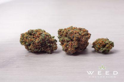 BLUE MOON weed collection cannabis light italia 2 416x277 - Blue Moon - 2gr - by Weed Collection infiorescenze, cannabis-light