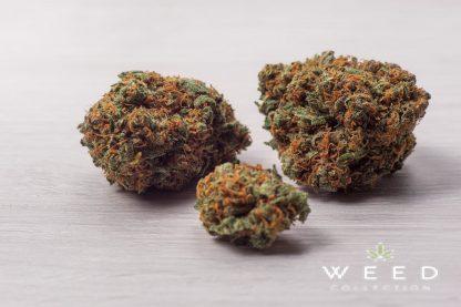 BLUE MOON weed collection cannabis light italia 416x277 - Blue Moon - 2gr - by Weed Collection infiorescenze, cannabis-light