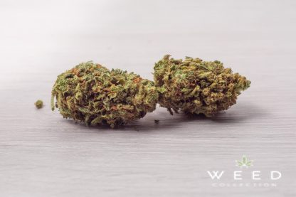 SAHARA weed collection cannabis light italia 416x277 - Sahara - 1gr - by Weed Collection infiorescenze, cannabis-light