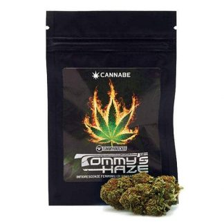 tommys haze tommyknocker cannabe cannabis light italia marijuana legale 324x324 - Tommy's Haze - 3gr - Tommy Knocker infiorescenze, cannabis-light