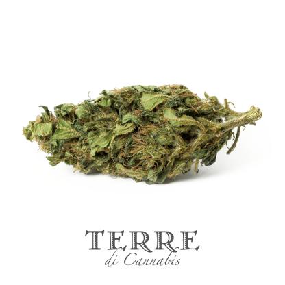 1 TERRE cannabis RISERVA 1 LR 416x416 - Riserva Opulenta - 1gr - Terre di Cannabis infiorescenze, cannabis-light