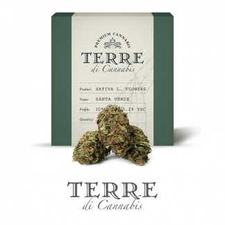 10 TERRE cannabis SANTA 3grams LR 324x324 - Santa Verde - 3gr - by Terre di Cannabis novita, infiorescenze, cannabis-light