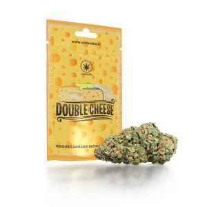 cannabis cheese