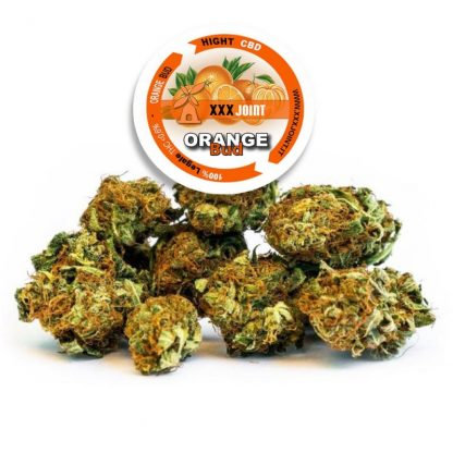 orange bud cbd 24 xxxjoint cannabis legale light 416x416 - Orange Bud CBD 24% - 3gr - Xxxjoint infiorescenze, cannabis-light