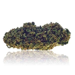 strawberry champagne cannabe cannabis legale cannabis light 300x300 - TERRE DI CANNABIS