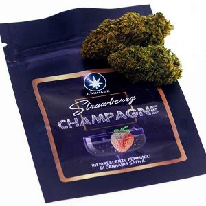 strawberry champagne cannabe infiorescenza e busta cannabis legale cannabis light 300x300 - TERRE DI CANNABIS