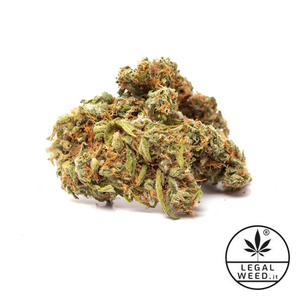 west santana legal weed fiori cannabis light 600x600 - West Santana - 5gr - Legal weed formati-maxi, cannabis-legale, cannabis-light