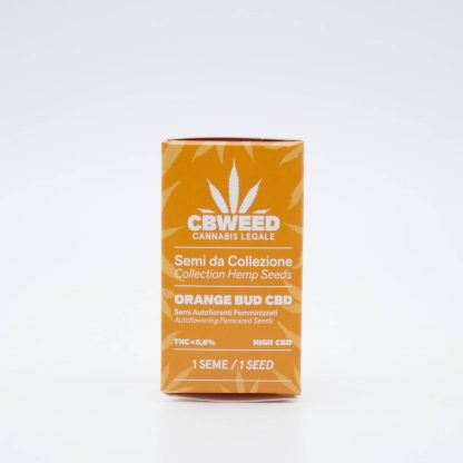 semi cannabis light Orange Bud cbweed 416x416 - Semi Autofiorenti Femminizzati Orange Bud CBD - Cbweed semi, novita, cannabis-light