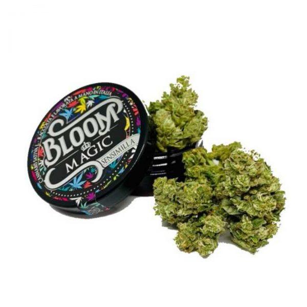 bloom magic cannabis 600x600 - Magic - 3gr - Bloom cannabis-legale, fino-a-3-gr, cannabis-light