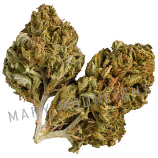 AMnesia cure maria light 324x324 - Amnesia Cure - 3gr - Mary Moonlight novita, infiorescenze, cannabis-light