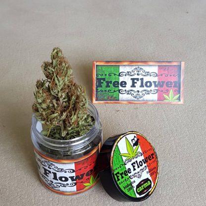 IMG 20190923 WA0005 416x416 - Carma - 3gr - Free Flower novita, infiorescenze, cannabis-light