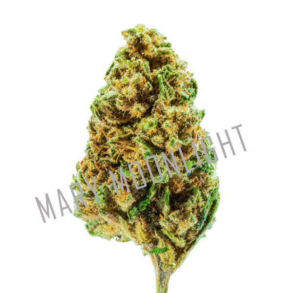 SPACE Widow 2020 1 1 600x600 - Space Widow - 3gr - Mary Moonlight cannabis-legale, cannabis-light