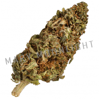 albascura mary moonlight cannabis light 324x324 - Albascura - 3gr - Mary Moonlight novita, infiorescenze, cannabis-light