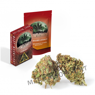lifeberry erba legale 324x324 - Lifeberry - 1gr - Mary Moonlight novita, infiorescenze, cannabis-light