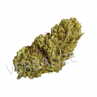 pist orange verbalize cannabis legale 324x324 - Pist'Orange - 3gr - Verbalize novita, cannabis-legale, cannabis-light