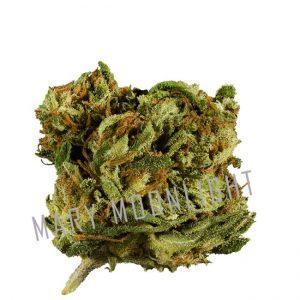 marijuana leggera