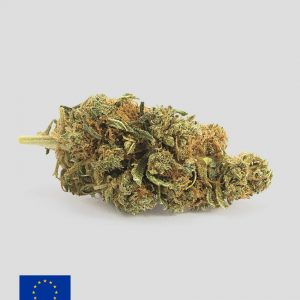 harlequin cannabis light 300x300 - TERRE DI CANNABIS