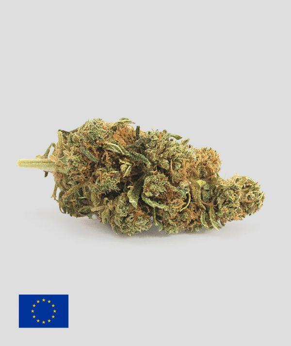 harlequin cannabis light 600x712 - Harlequin - 1gr - Flower Farm cannabis-legale, fino-a-3-gr, cannabis-light
