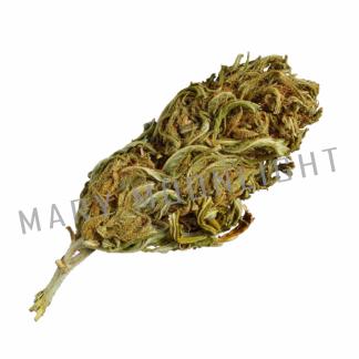 eletta campana cannabis light 324x324 - Eletta Campana - 5gr - Mary Moonlight novita, infiorescenze, cannabis-light