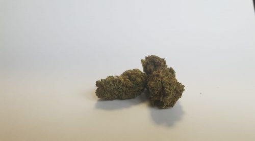 top quality - Maria Salvador - Top Quality - 3gr - by J-Ax cannabis-legale, fino-a-3-gr, cannabis-light