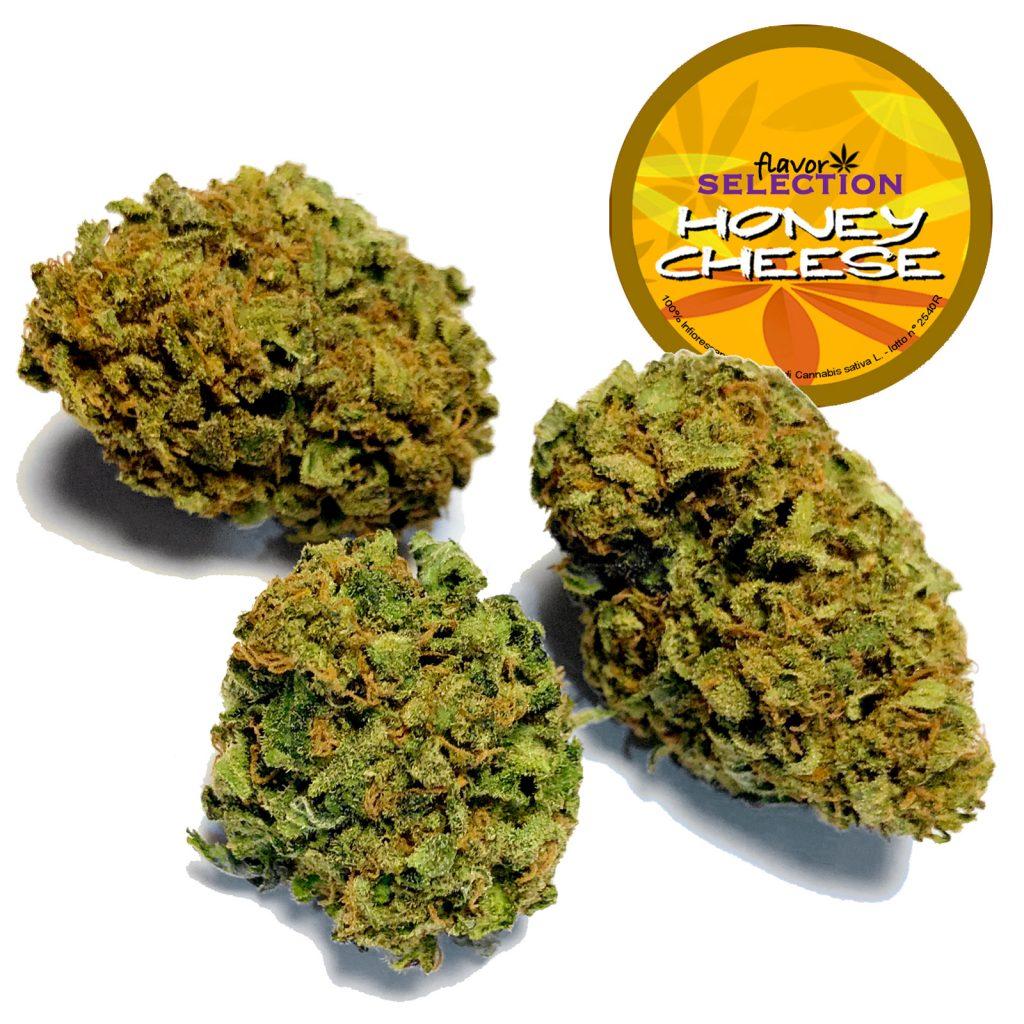 honey cheese cannabis light